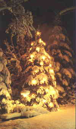 Pagans Lit Fir Trees To Honor The Dead &amp; Deities